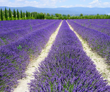 provence-small